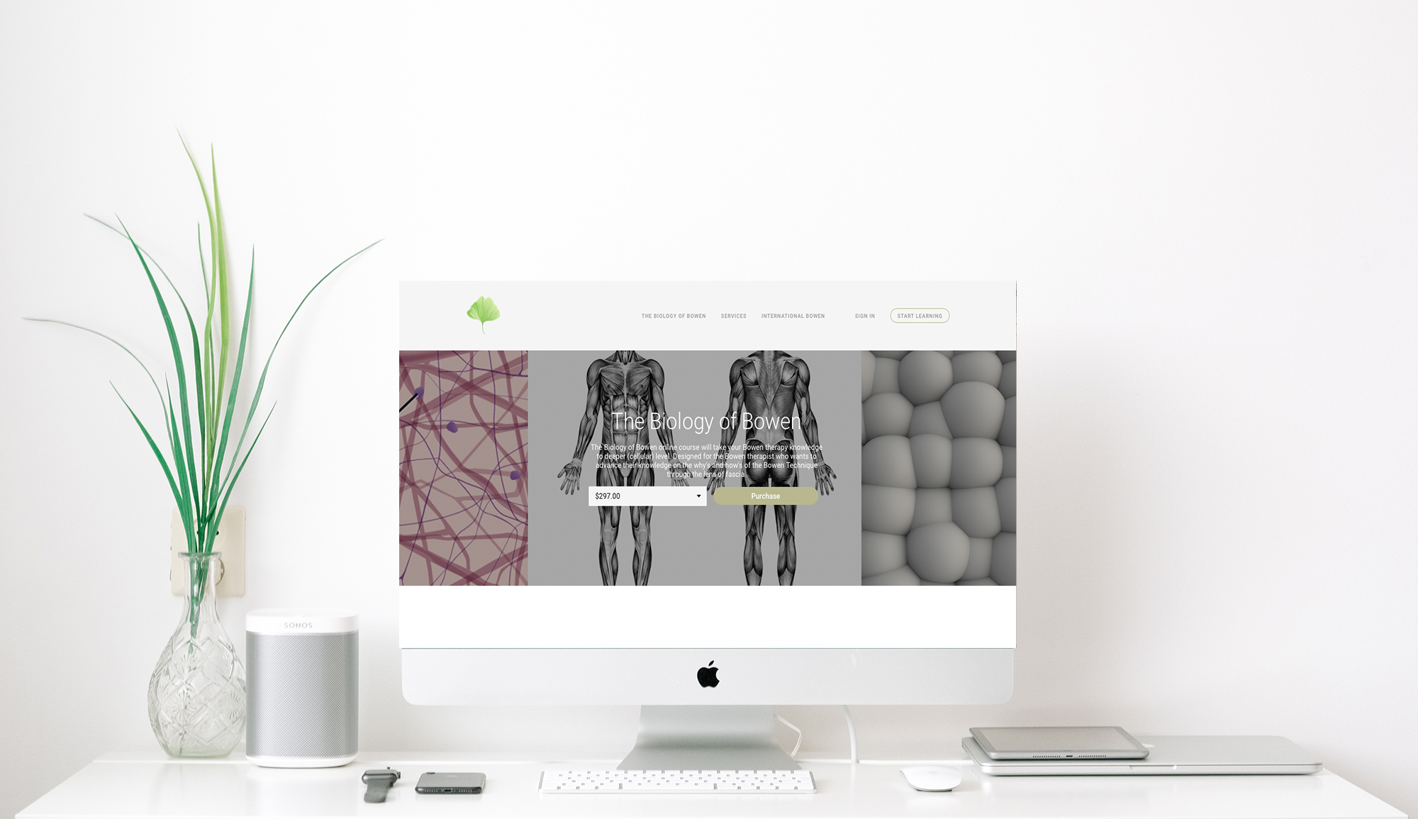 biology of bowen online course for bowen therapists